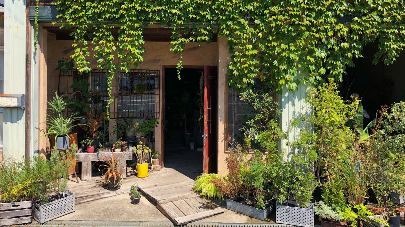お洒落な植物に囲まれた植物屋